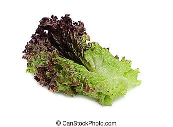 fris, blad, lettuce., rood