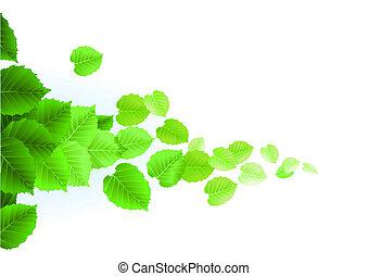 fris, bladeren, witte achtergrond