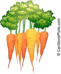 fris, bladeren, wortels