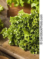 fris, gezonde , organisch, groen blad, sla