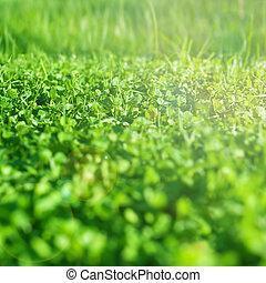 fris, gras, field., groen gras, textuur, -, abstract, lente, achtergrond, of, zomer, achtergrond