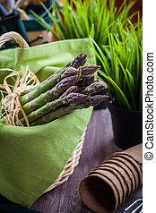 fris, groene, asperges, met, tuinieren gereedschap
