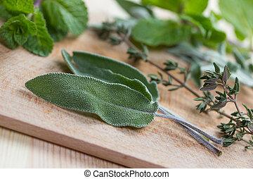 fris, groene, keukenkruiden
