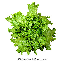 fris, groene salade