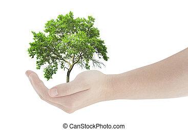 fris, groene, vasthouden, boompje, hand