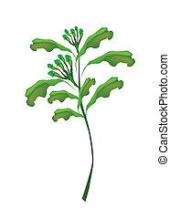 fris, kruidnagel, witte , plant, achtergrond