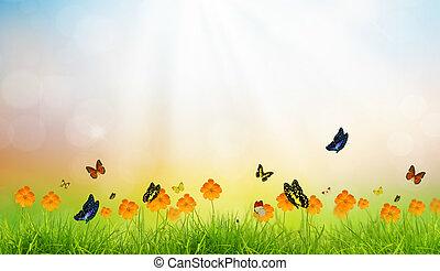 fris, lente, groen gras, met, vlinder, zomertijd