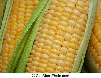 fris, maïs cob