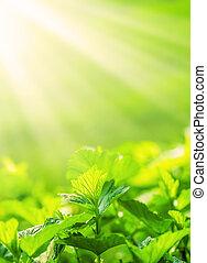 fris, nieuw, brink loof, gloeiend, in, zonlicht