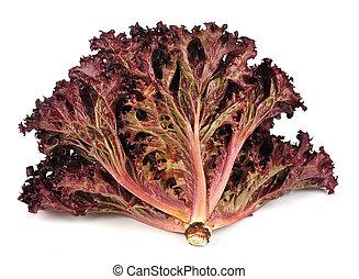 fris, rode lettuce, slaatje