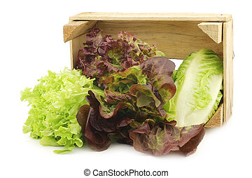 fris, romaine, en, rode lettuce, in, een, ?????? ????ß?