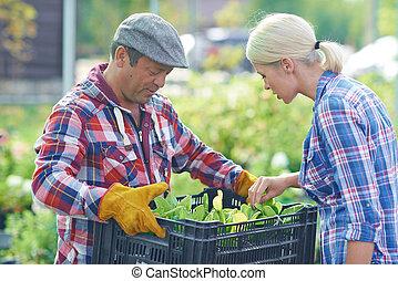 fris, seedlings