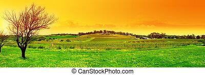 fris, wijngaard, panoramisch