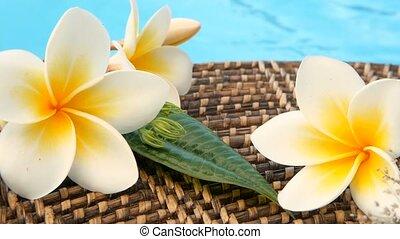 fris, witte , frangipani, plumeria, tropische , exotische bloemen, op, blauwe , zwembadwater