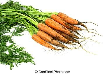 fris, wortels, organisch