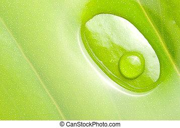 frisch, dews, grünes blatt