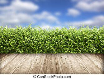 frisch, fruehjahr, grünes gras, mit, blauer himmel