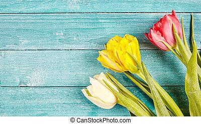 frisch, fruehjahr, tulpen, hintergrund, mit, kopieren platz