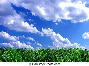 frisch, grün, gras, mit, blauer himmel