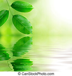 frisch, grüne blätter, hintergrund