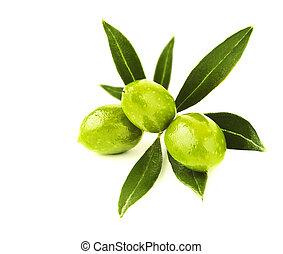 frisch, grüne oliven, zweig