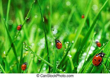 frisch, grünes gras, mit, bewässern fallen
