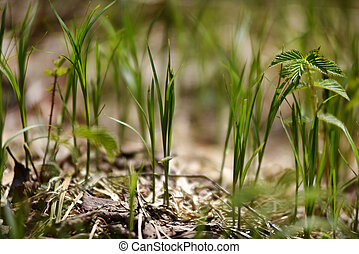 frisch, grünes gras