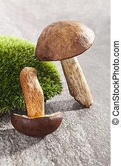 frisch, paar, mushrooms.