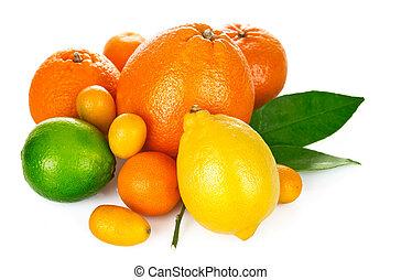 frisch, zitrusfrucht, mit, grünes blatt