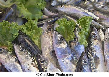 frischer fisch, an, der, markt