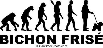 frise, evolución, bichon