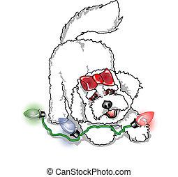 frise, navidad, bichon, perro, poodle