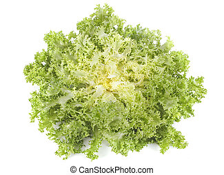 frisee chicory endive salad in front of white background
