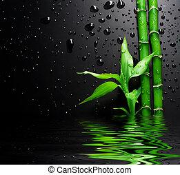 frisk, bambu, över, svart
