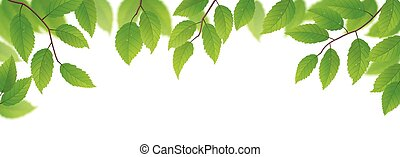 frisk, bladen, grön