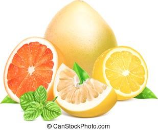 frisk, citrusträd frukt, med, bladen