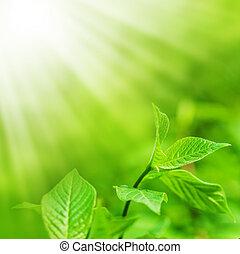 frisk, färsk, grönt lämnar, och, avskrift, spase