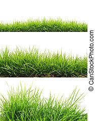 frisk, fjäder, grönt gräs