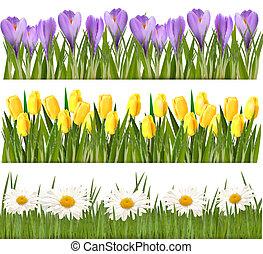 frisk, forår, og, blomst, kanter