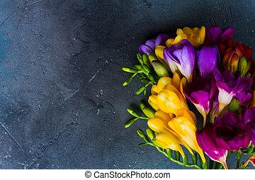 frisk, freesia, blomningen
