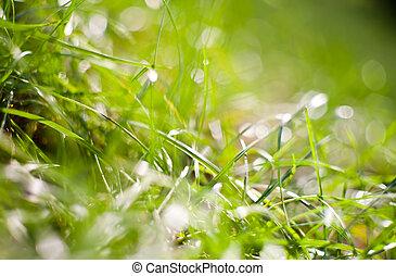 frisk, grönt gräs, in, morgon, lätt