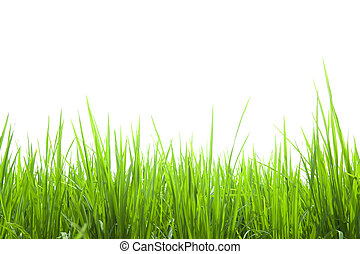 frisk, grönt gräs, isolerat, vita
