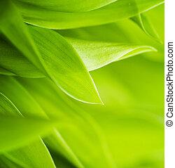 frisk, grönt gräs, (shallow, dof)