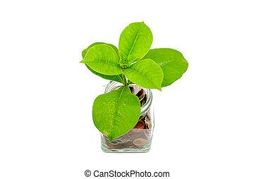 frisk, grönt träd, växande, från, mynter