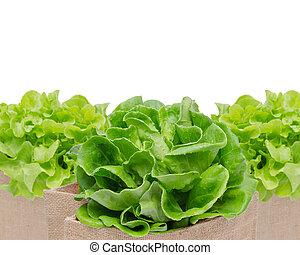 frisk, grønne grønsager, isoleret