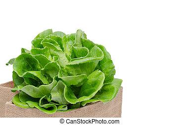 frisk, grønne grønsager