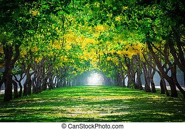 frisk, och, grön, vacker, av, sommar, blomning, gul blommar,...