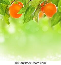 frisk, plommon, fruit., gul