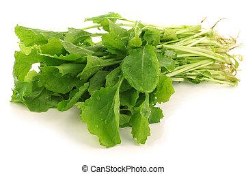 frisk, rova, blast, (turnip, greens)