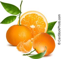 frisk, tangerer, med, grönt lämnar, och, orange.